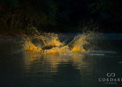 mud pool splash